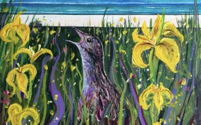 Corncrake in the Irises